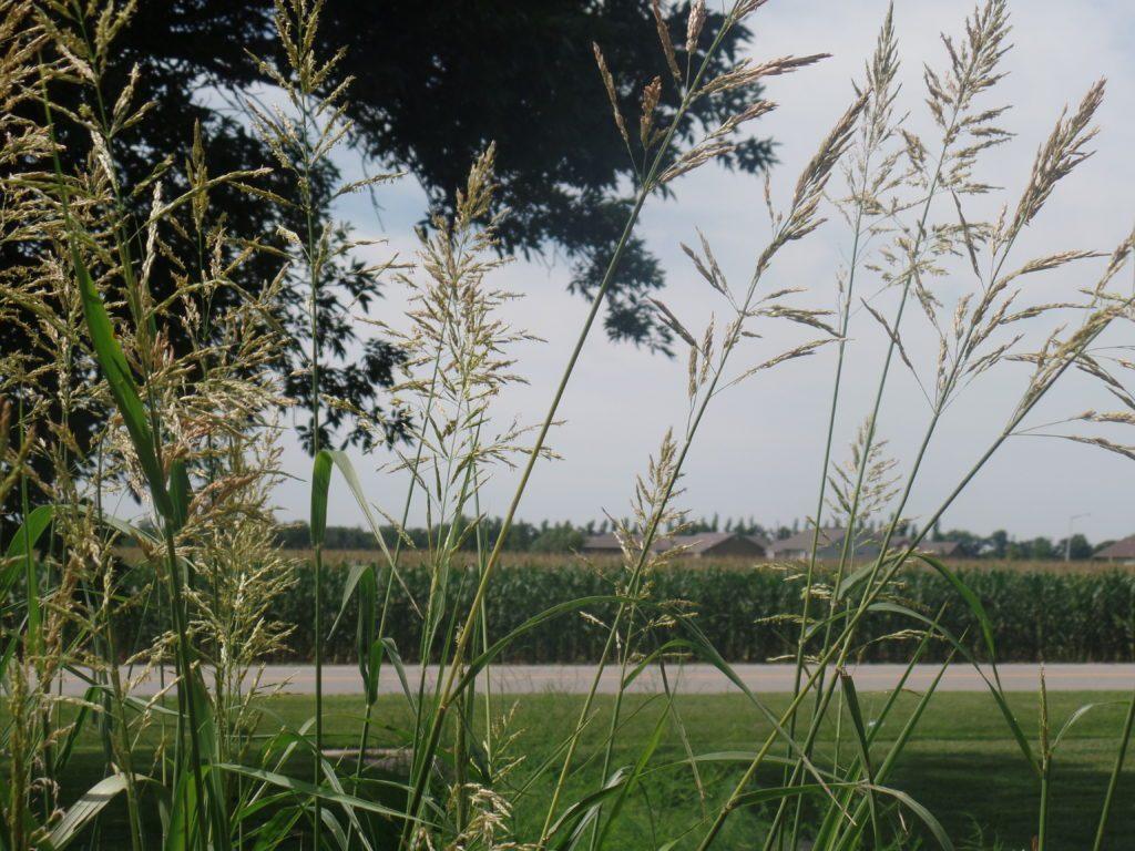 Corn field 1024x768 - Why Choose Mount Hope?