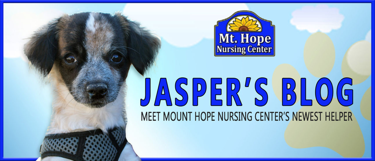 Jasper Blog header 1294x555 - Woof and Happy Holidays, everyone!