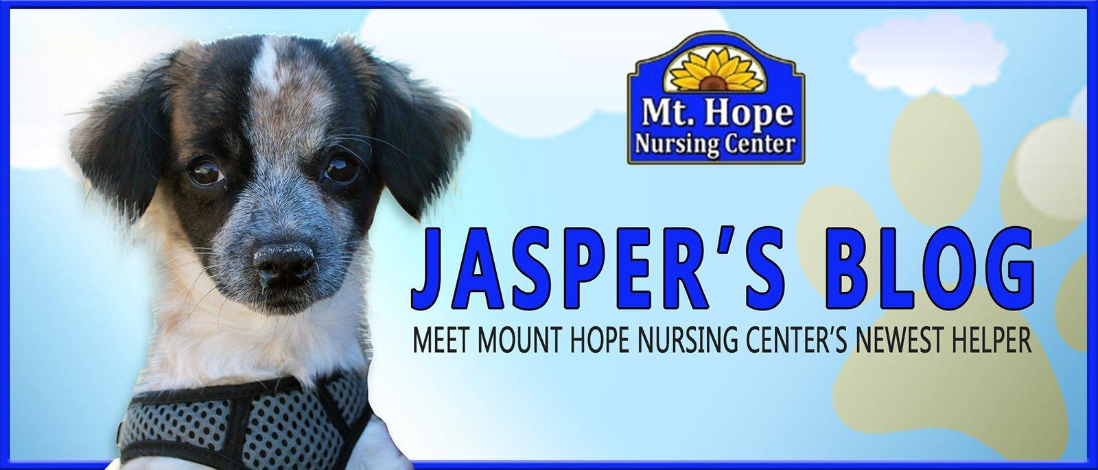 Jasper Blog header - Jasper's Blog