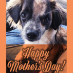 Jasper Mothers Day 150x150 - Happy Mother's Day from Jasper!