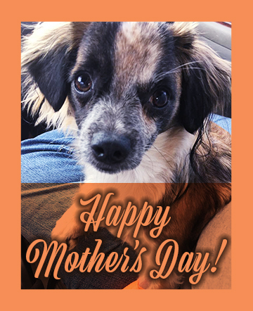 Jasper Mothers Day - Happy Mother's Day from Jasper!