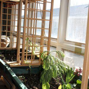 plants growing in our indoor garden