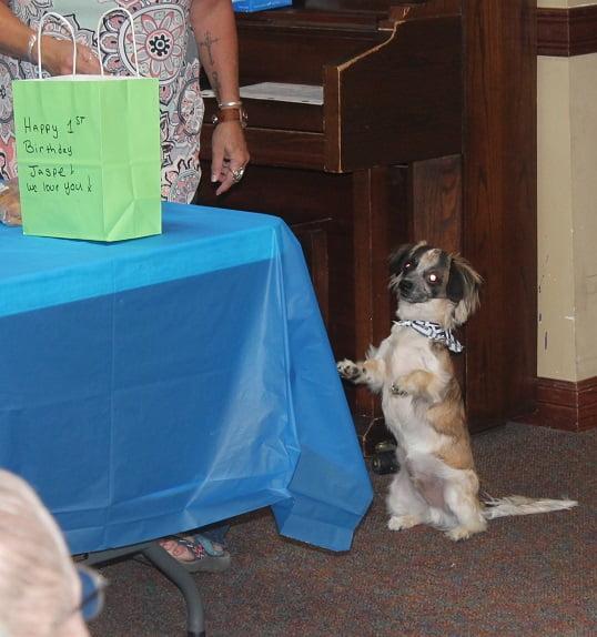 Jasper begging bag - Happy Birthday To Me!